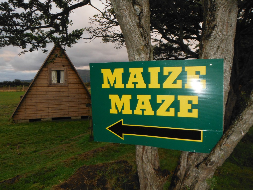 this way to the maize maze